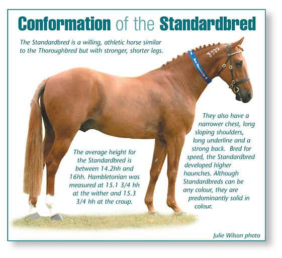 Conformation of the Standardbred